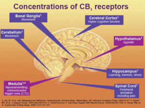 Image Credit - http://theleafonline.com/c/science/2014/06/cannabinoid-profiles-meet-cb-receptors/